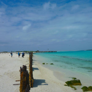 Midway, Atoll, Island, Northwestern, Hawaiian, Islands, sand, beach, marine, debris, clean up, NOAA