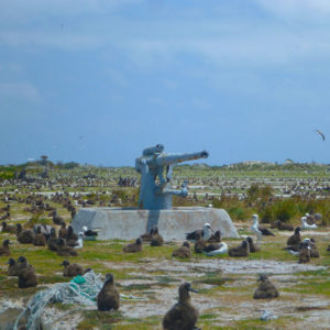Albatrosses, Midway, Atoll, Island, Northwestern, Hawaiian, Islands, sand, beach, marine, debris, clean up, NOAA, WW2, World, War, two, 2, military, canon, guns