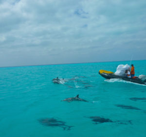 Midway, Atoll, Island, Northwestern, Hawaiian, Islands, sand, beach, marine, debris, clean up, NOAA, dolphins, pod, zodiac