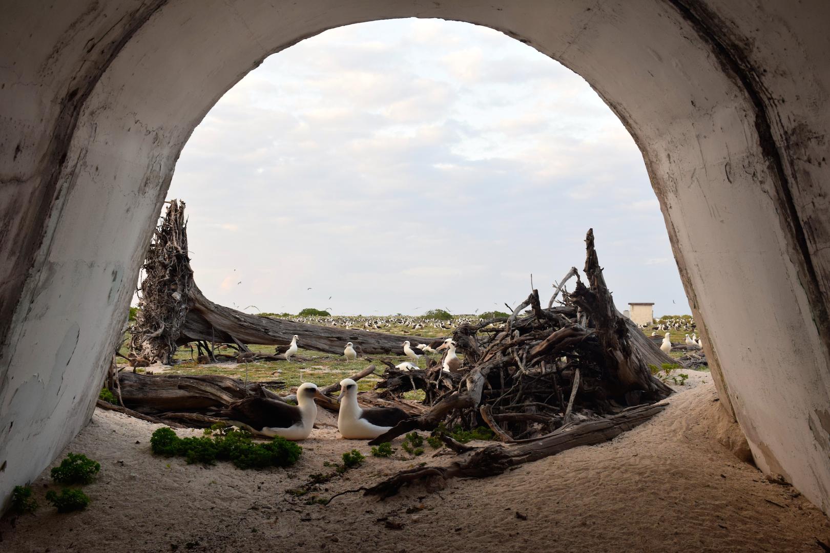 Bunker, Albatross, Midway, Atoll