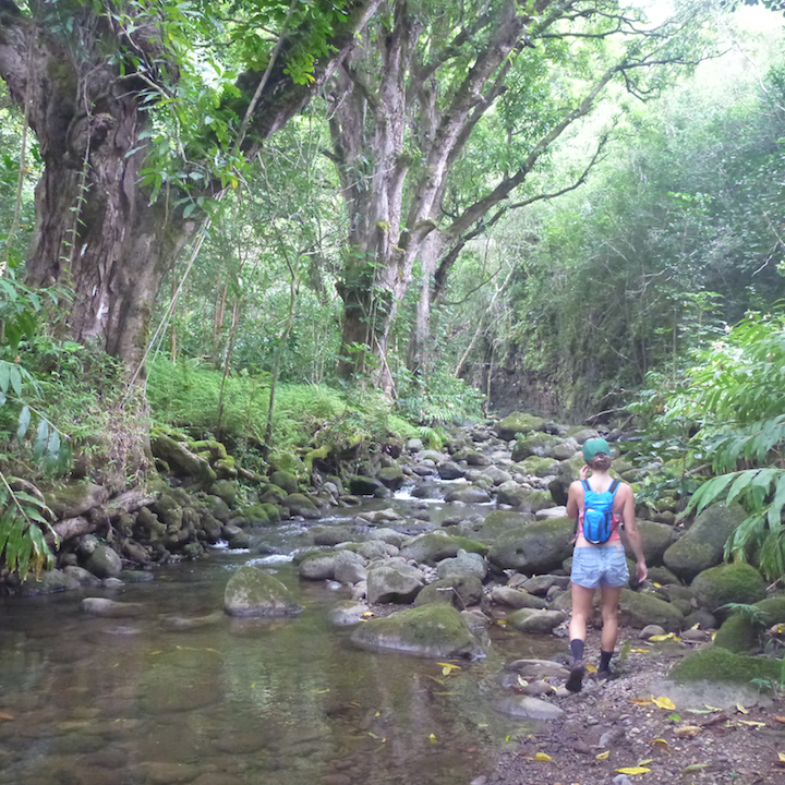 Koloa gulch, stream, river, creek, crossing, hike