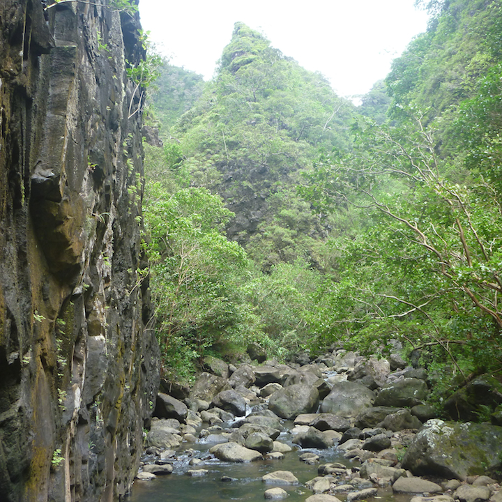Oahu, Hawaii, hike, Koloa gulch, the fork