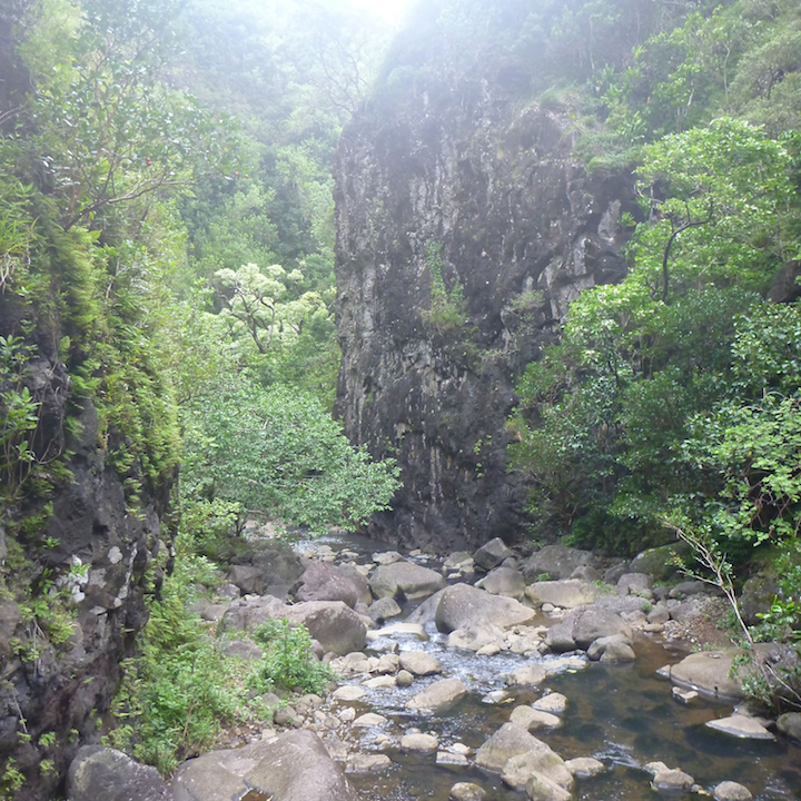 Oahu, Hawaii, hike, koloa, gulch, narrow, valley