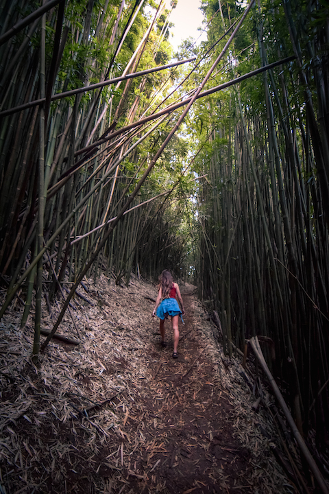 Hawaii, Oahu, Adventure, Explore, Hike, Forest, Jungle, Trail, Koolau, Mountains, Tantalus, Sunset, hawaiifunshine, radio tower, phone tower, the tower, bamboo