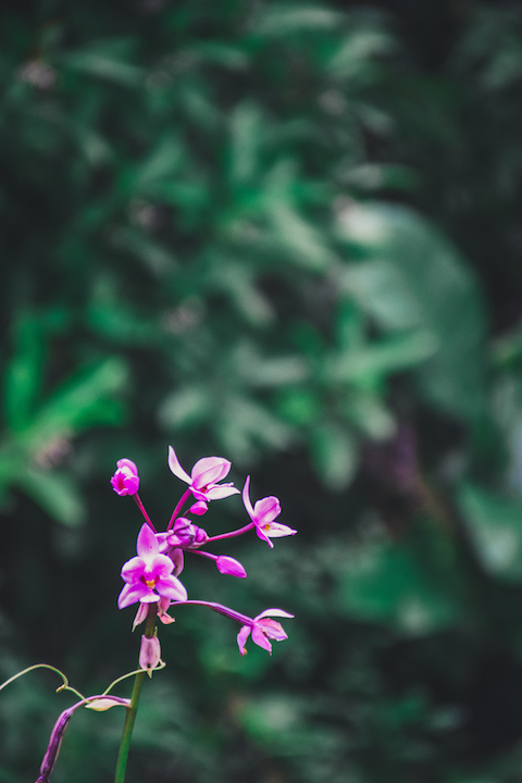 Hamama, Waihehe, Falls, Waterfall, Oahu, Hike, Adventure, Explore, orchid, flower