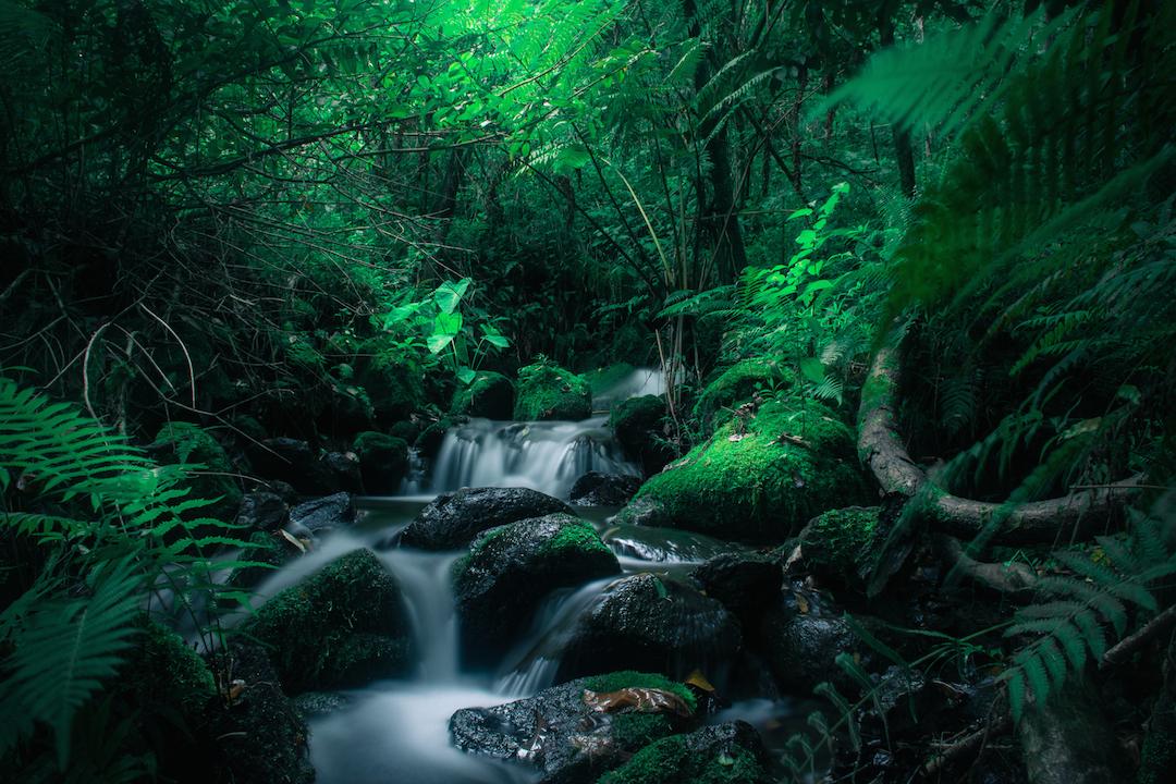Long exposure, Oahu, Hawaii, stream, river, Taro, magical, forest, jungle, Kaneohe, Hamama, Waihehe